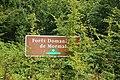 Forêt de Mormal 02.jpg