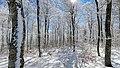 Forêt du mont Aigoual (Pra peyrot) en hiver.jpg