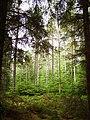 Forest, Glen Glass - geograph.org.uk - 207876.jpg