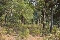 Forest - Budhibili - Dandadhar Road - Dhenkanal 2018-01-25 9652.JPG