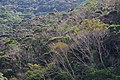 Forest at Mount Yae Okinawa 201911 01.JPG