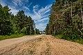 Forest in Minsk (June 2020) 4.jpg