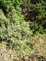 Forestry, Laharan - geograph.org.uk - 250561.jpg