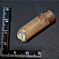 Fossil Rostren (Belemnoidea) Bruchstück, Rethen (Vordorf), Germany (03).jpg