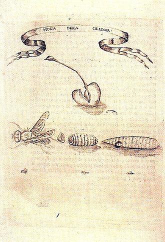 Francesco Redi - Illustration from Redi's Esperienze Intorno alla Generazione degl'Insetti
