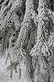 Frost5.jpg
