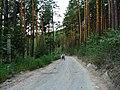 G. Miass, Chelyabinskaya oblast', Russia - panoramio (154).jpg