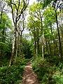 GOC Tring & Wendover Woods 043 Wendover Woods (33938321294).jpg