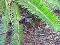 Gardenology.org-IMG 2644 ucla09.jpg