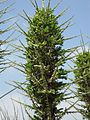 Gardenology.org-IMG 4446 hunt0904.jpg