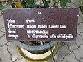 Gardenology.org-IMG 7811 qsbg11mar.jpg