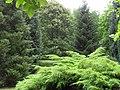 Garten mit Koniferen.jpg