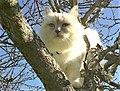 Gatta sull'albero.jpg