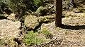 Gelobtbachtal, údolí Klopotského potoka - panoramio (16).jpg
