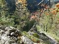 Gemeinde Naas, 8160, Austria - panoramio (4).jpg