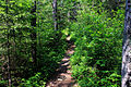 Gfp-minnesota-superior-national-forest-hiking-trail-to-eagle-mountain.jpg