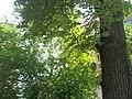 Giardino botanico di Brera (Milan) 303.jpg