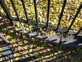 Ginkgo biloba Leaves NYC 2000px.jpg