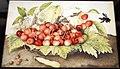 Giovanna garzoni, piatto di ciliege con rose, baccello e ape legnaiola (xylocopa violacea) 1642-51 ca., 01.JPG