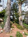 Gnarled tree trunks, Oldway mansion, Paignton - geograph.org.uk - 696668.jpg
