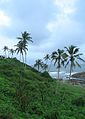 Goa - An Overcast Season (30).JPG