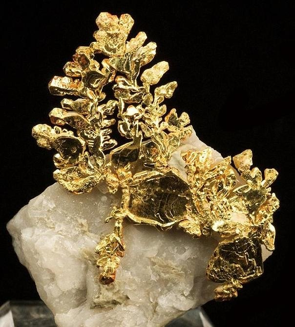 Gold-221313
