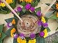 Gomphrena globosa fleurs violettes Laos.jpg