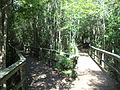 Grand Bay Wetlands Management Area boardwalk 03.JPG