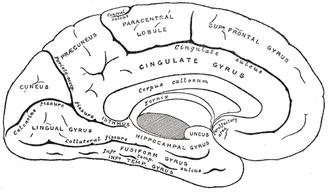 Flashback (psychology) - Mid Sagittal cut of human brain