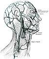 Gray AnatomyOfHumanBody1918-P644 Figure557.jpg