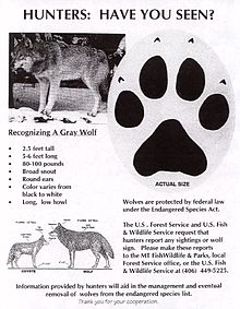 Gray wolf endangered species sheet.jpg