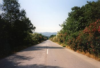 Greek National Road 16 (Ierissos-Stratoniki) - Flowers besides the road between the two villages.jpg