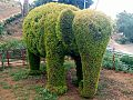 Green Elephant in Kakching Garden.jpg