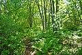 Green is restful... (29093035256).jpg