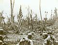 Guam USMC Photo No. 1-12 (21438870148).jpg