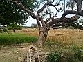 HAYAL MUGHLAN - panoramio (10).jpg
