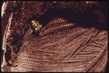 HEMLOCK SEEDLING IN A BURNED CLEAR-CUT AREA OF OLYMPIC NATIONAL TIMBERLAND, WASHINGTON. NEAR OLYMPIC NATIONAL PARK - NARA - 555085.tif