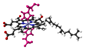 Heme A - Heme a in cyctochrome c oxidase, bound by two histidine residues (shown in pink)