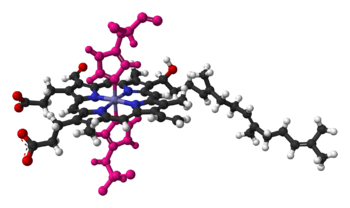 Heme a in cyctochrome c oxidase, bound by two histidine residues (shown in pink)