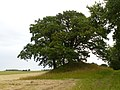 Hallebroendshoej (Grabhügel), Hügel, Bornholm, 2017-07-23, yj.jpg