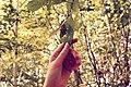Hand with leaf.jpg
