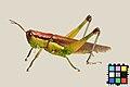 Hanenagainago-Q10632-DSC-8463.jpg