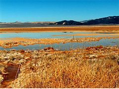 Harper Dry Lake Marsh.jpg