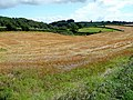Harvested field east of George Lane - geograph.org.uk - 1459050.jpg