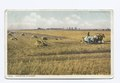 Harvesting in Kansas (NYPL b12647398-69580).tiff