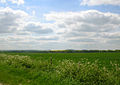 Harwell Field SW - geograph.org.uk - 8924.jpg