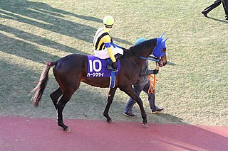 Hearts Cry (horse) Japanese-bred Thoroughbred racehorse