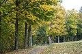 Herbstlicher Weg 06102018 001.jpg
