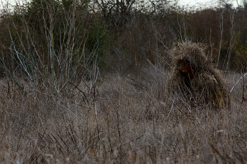 File:Hiding in plain sight, Marines tackle stalking against instructors 131120-M-PC317-011.jpg