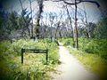 Hike to Mackenzie Falls.jpg